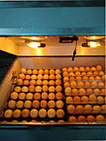 Инкубатор для яиц Наседка ИБА-140  автоматический с вентилятором, фото 3