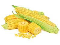 Семена кукурудзи