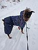 """Комбинезон зимний, костюм """"Звездопад"""" для собаки. Одежда для собак, фото 6"""