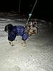 """Комбинезон зимний, костюм """"Звездопад"""" для собаки. Одежда для собак, фото 7"""