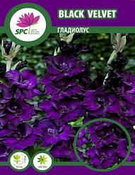 Гладиолус Black Velvet