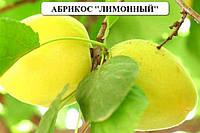 Саженцы абрикоса,,нектарина,сливы,вишни,черешни саженцы плодовых