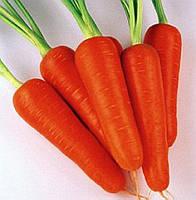 Морковь / Морква КУРОДА ШАНТАНЭ / KURODA SHANTANU / КУРОДА ШАНТАНЕ 0.25кг  –  Sakata