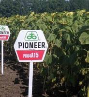 Семена подсолнечника Pioneer PR64А15