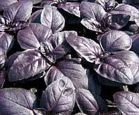 Семена базилика Виолет Кинг F1, фиолетовый, (50 гр.) Lark Seeds
