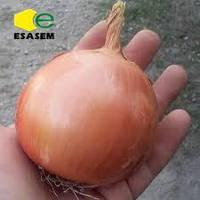 Esasem Дорика (1004) F1 (Dorika F1) семена лука репчатого Esasem, оригинальная упаковка (100000 семян)