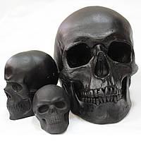 Модели черепов