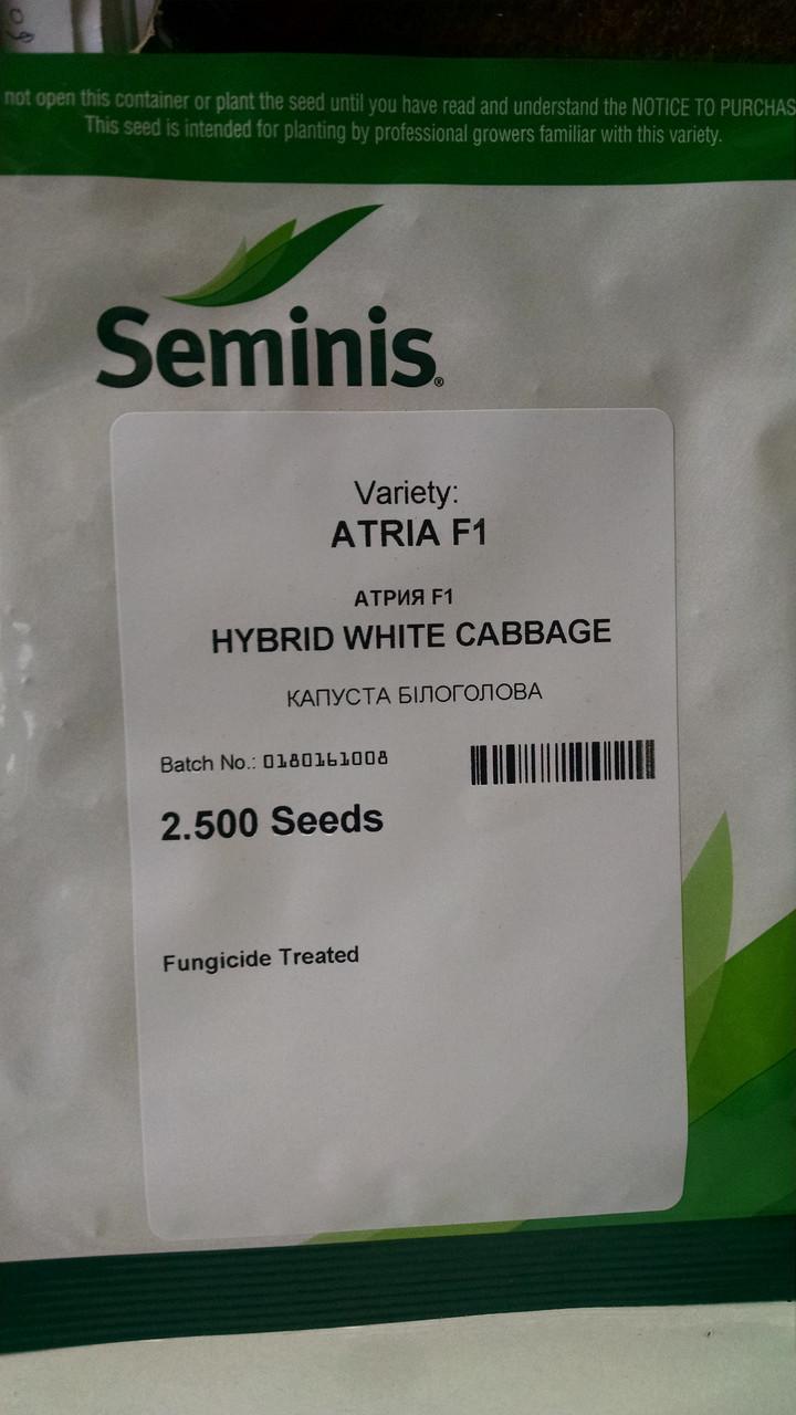 """Капуста білокачанна Атрія F1 2500 насінин, """"Seminis"""", Голландія"""