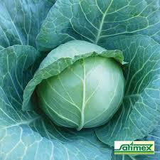"""Насіння капусти білокачанної Бірюза 100 г, 30 000 насіння""""Satimex"""", Німеччина"""