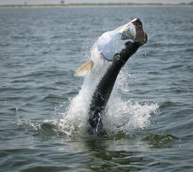 Как будет ловиться рыба 13, 14 и 15 марта.