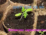 Грунт для квітів клумб продаж Київ Торф для квітів Київ, фото 2