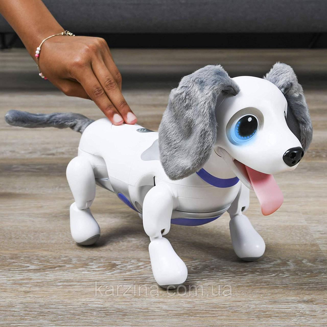 Интерактивная собака робот-игрушка Zoomer Playful Pup от Spin Master