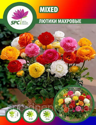 Лютик Ranunculus Mixed