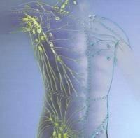 Как правильно поставить диагноз? Лимфо-эндокринная система.
