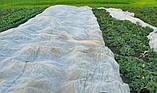 Агроволокно плотность 19 (3.2м-100м), фото 2