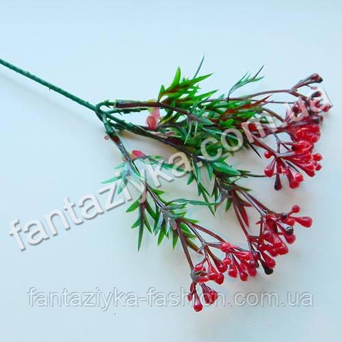 Декоративная веточка мимозы остролистная с красными ягодами