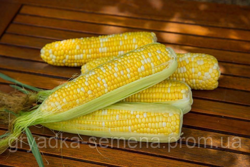 Кукуруза сахарная Ракель F1 Clause 50 000 семян