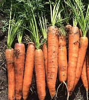Морковь Сатурно F1 Clause 100 000 семян
