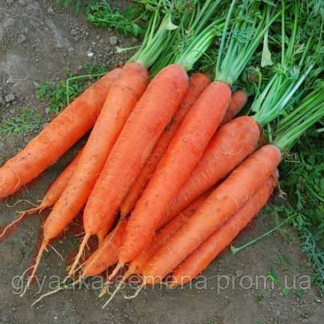 Морковь Матч F1 Clause 25000 семян
