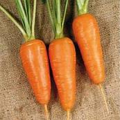 Морковь Мирафлорес F1 калибр 1.4-1.6 Clause 100 000 семян