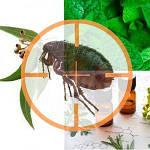 Биосредства от паразитов для животных
