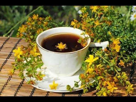 Зверобой продырявленный трава чай