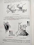 Планировка городов и районов В.Давидович 1964 год Стройиздат, фото 9
