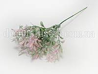 Дополнитель - трава тмина бледно-розовая
