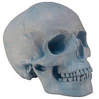 Череп людини, модель з гіпсу, синій, пастельний тон, натурального анатомічного розміру, для декорування, фото 1