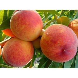 Саженцы абрикоса и персика