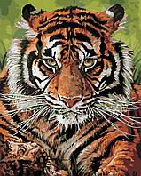 Художественный творческий набор, картина по номерам Взгляд тигра, 40x50 см, «Art Story» (AS0393), фото 1