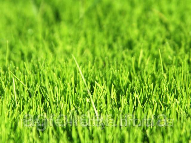 Семена газона универсального (1 килограмм)