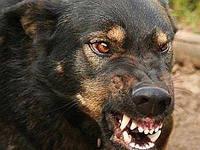 От агресивных животных