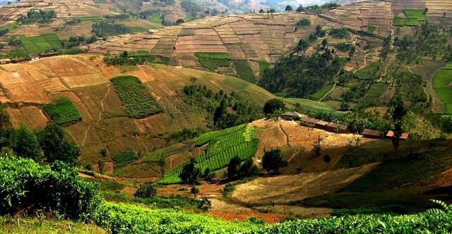 выращивание кофе арабика бурбон в Бурунди