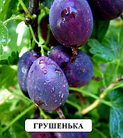 Грушенька сорт крыжовника с большой урожайностью саженцы плодовых