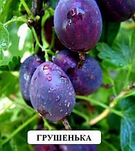 Крыжовник Грушенька