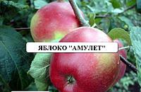 Амулет вкуснейшее яблоко для вашего участка саженцы плодовых