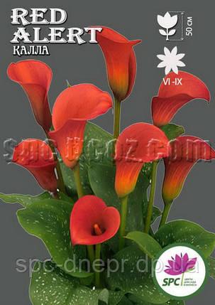 Calla(Калла) Red Alert, фото 2