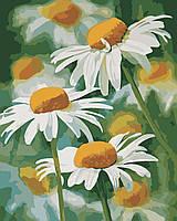 Художественный творческий набор, картина по номерам Нежные ромашки, 40x50 см, «Art Story» (AS0341), фото 1