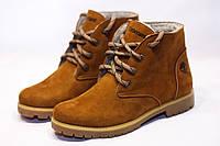 Зимние ботинки  (на меху) женские Timberland (реплика) 13050, фото 1