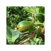 Средства, применяемые для защиты растений