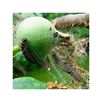 Препараты для защиты растений от вредителей и болезней