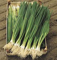 Семена лука Параде 100 сем., Bejo Zaden, Голландия