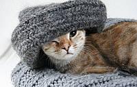 Согрейтесь в холода