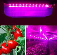 Фитопрожектор полного спектра 25Вт, упак/10шт, фитоосвещение теплиц