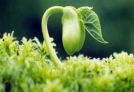 Как стимулировать рост растений?