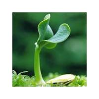 Применение стимуляторов роста растений