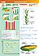 Семена кукурузы ДМС 3015 (ФАО 300) MAIS, фото 2