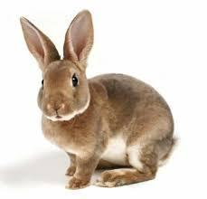 Премиксы и кормовые добавки для кроликов ТМ Purina