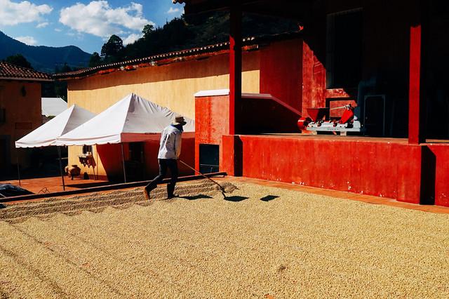 какой вкус у арабики Гватемала, свежеобжаренный кофе с доставкой
